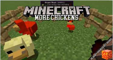 More Chickens Mod 1.12.2/1.11.2/1.10.2